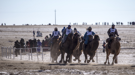 Winter festival camel racing nomads Editorial