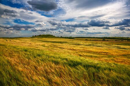 Beautiful wheat field in windy weather. Ukraine Stock Photo