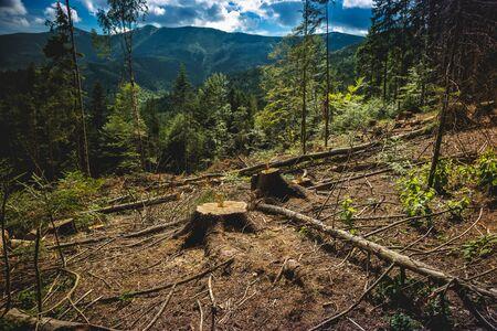 Illegal deforestation in the Ukrainian Carpathians. The destruction of the forest