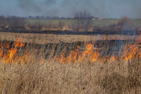 Dry grass fire in the steppe. Burning dry grass in the spring.