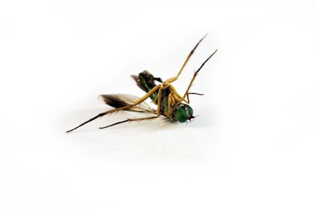 Dead Fly Stock Photo