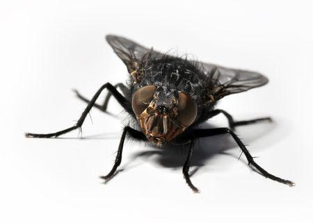 minuscule: Fly