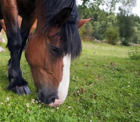 paddock: Horses in paddock Stock Photo