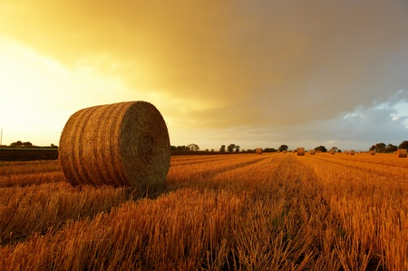 Straw bales on farmland  Stock Photo - 8504906