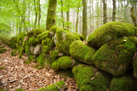 Stone wall moss-covered photo