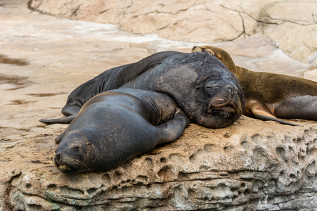 Seals and sea lion resting on a rock