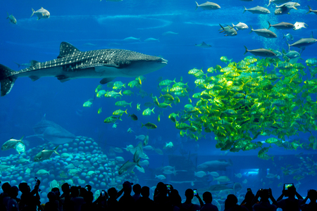 Silhouettes of people at an aquarium with shark and tropical fishes at Chimelong Ocean Kingdom, Zhuhai, Guangdong, China