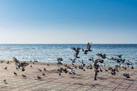 A group of pegeons flying at the Jeddah Corniche, 30 km coastal resort area of the city of Jeddah. Located along the Red Sea, features a coastal road, recreation areas, pavilions and civic sculptures