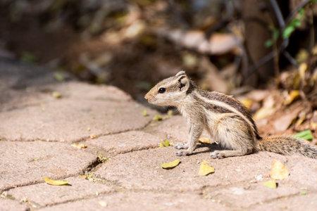 A cute chipmunk under sunlight in the Nehru Zoological Park, Hyderabad, India.