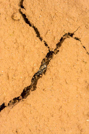 Cricket living on the cracked dry earth Stock Photo