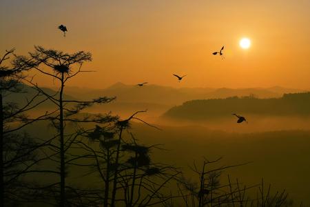 birdnest: Sunrise Stock Photo