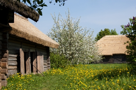 The old village houses and blossoming trees photo