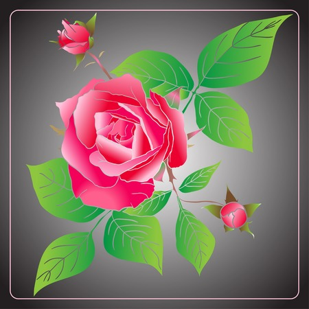 Vector Stencil Roses on gray background Best for background greeting cards and invitations Vector