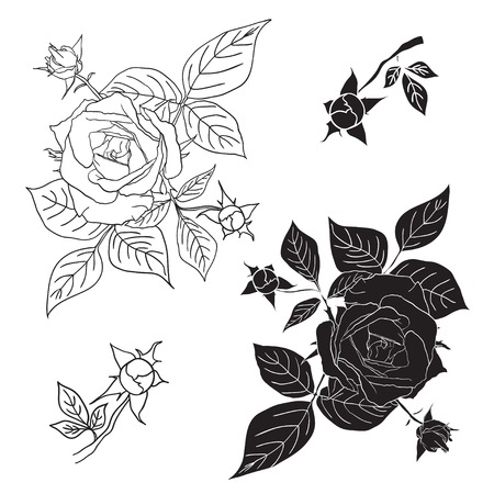 Four black and white roses. Vector illustration. Elements for design tattoo, textiles, prints. Illustration