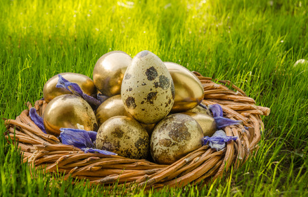 sun lit: Simple and gold quail eggs on green grass background, lit by sun. Easter concept