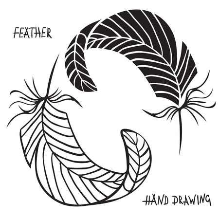 white feathers: Hand drawn silhouettes of feathers in black and white. Vector illustration. Best for invitations, postcards, textiles, tattoo,
