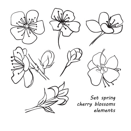 black and white image drawing: Set of spring cherry blossom flowers. Hand drawing. Black and white. Vector illustration Illustration