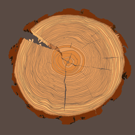 tree cross section: Annual tree growth rings with brown tonesdrawing of the cross-section of a tree trunk. Vector illusration