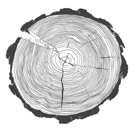 Annual tree growth rings with grayscale drawing of the cross-section of a tree trunk isolated on white. Vector illusration Ilustração