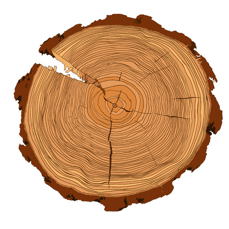 wood cross section: Annual tree growth rings with brown tones drawing of the cross-section of a tree trunk isolated on white. Vector illusration Illustration