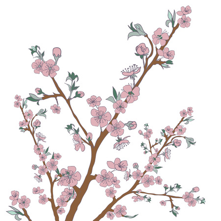 cherry branch: Flowering cherry branch on white. Vintage background. Vector illustration. Best for invitations, Web banner, greeting card