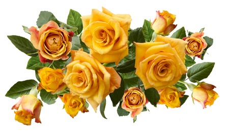 yellowish: Beautiful bouquet of yellowish orange roses isolated on white background. Overhead view.