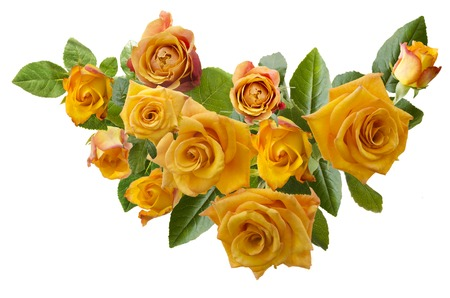 yellowish: Beautiful  frame with bouquet of yellowish orange roses isolated on white background. Overhead view.