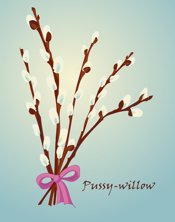 pussy cat: Beautiful pussy willow branches, vintage style. Spring background. Vector illustration Illustration