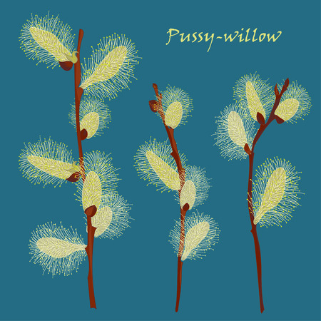 pussy: Beautiful pussy willow branches, vintage style. Spring background. Vector illustration Illustration