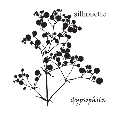 Branch of beautiful hand-drawn silhouette gypsophila in black, white and red colors.  Иллюстрация