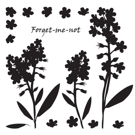 Set of bouquet beautiful forget-me-not flowers. Black silhouette on white background Vector illustration.