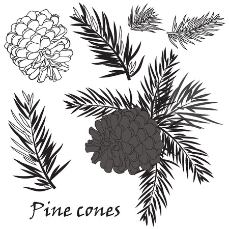 black and white cone: Fir tree branches with pine cone Black silhouette on white background. Vector illustrations Illustration