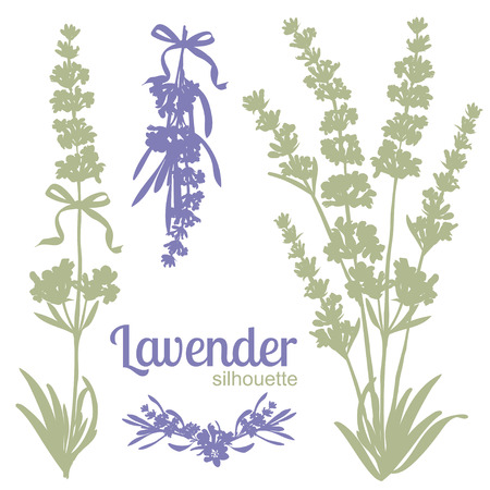 lavandula angustifolia: Set of silhouettes of lavender flowers. Vector illustration Illustration