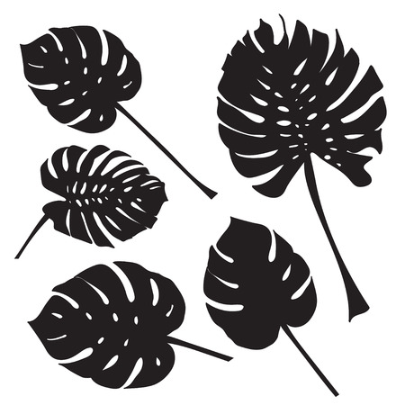 Silhouette tropical monstera leaves. Black isolated on white background.. Vector illustration