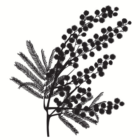 Hand-drawn branch of mimosa. Black silhouette on white background Good idea for your design, poster, greeting card, web banner. Vector illustration