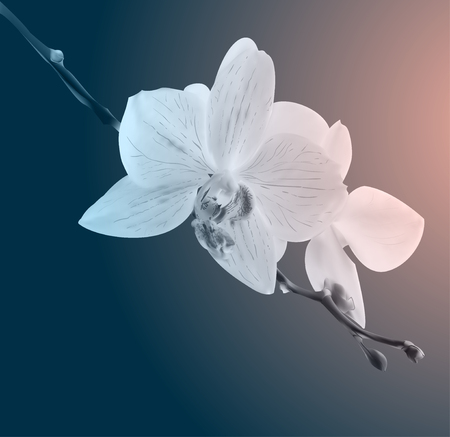 Creative design of a colorful  orchid flowers. Vintage card. Sad mood. Photo realistic botanical vector illustration