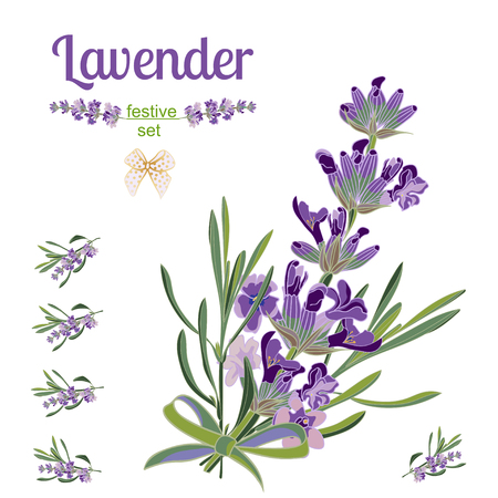 Set festive border and elements with Lavender flowers for greeting card. Botanical illustration are drawn by hand.