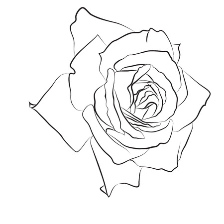Beautiful hand drawn sketch rose, isolated black contur on white background. Botanical silhouette of flower Vector illustration.