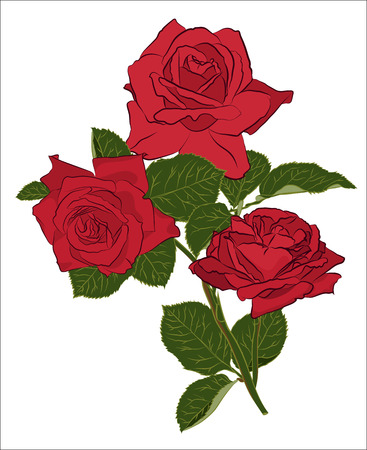 Beautiful red rose bouquet, isolated on white background. Botanical silhouette of flower. Flat stylization color. Vector illustration.