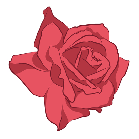 Beautiful pink rose, isolated on white background. Botanical silhouette of flower. Flat stylization vintage color. Vector illustration.