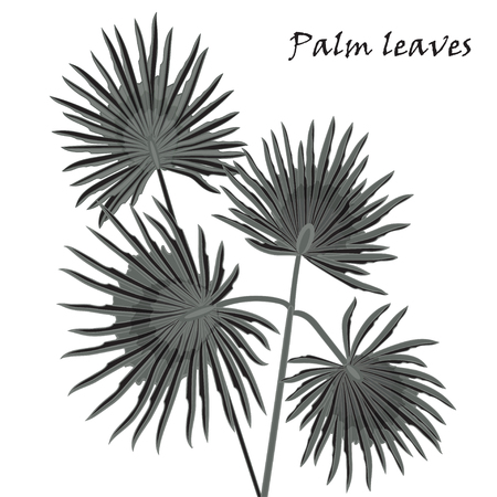 Silhouette tropical palm leaves black isolated on white background. Vector illustration