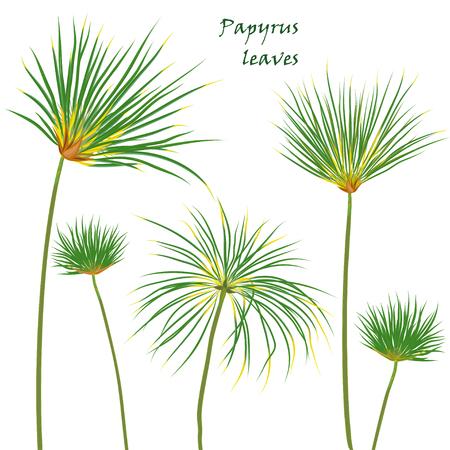 열대 야자 파피루스 잎을 놓으십시오. 평면 색상 스타일의 사실적인 그리기. 흰색 배경에 고립. 벡터 일러스트 레이 션