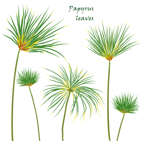 Set tropische Palmen Papyrus Blätter. Realistische Zeichnung im flachen Farbstil. Isoliert auf weißem Hintergrund. Vektor-Illustration Standard-Bild - 79567456