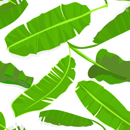 Seamless hand drawn tropical pattern with palm banana leaves, jungle exotic leaf on white background. Fashion textile print, summer floral wallpaper. Vector illustration, botanical drawing
