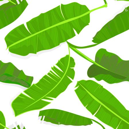 Mano transparente dibujado patrón tropical con hojas de plátano de Palma, hoja exótica de la selva sobre fondo blanco. Impresión textil de moda, papel tapiz floral de verano. Ilustración del vector, dibujo botánico