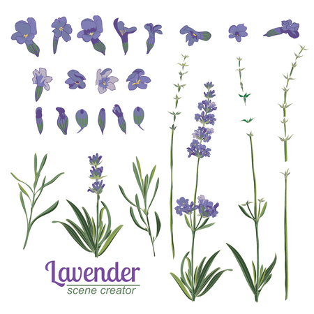 Lavender flower on white background. Colorful vintage vector illustration, watercolor style France provence retro pattern for romantic fresh design concept. Natural lavander aromatherapy treatment spa Illustration