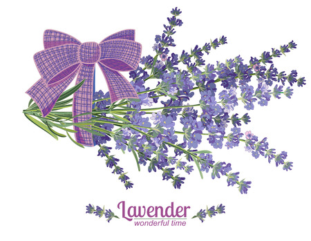 Lavender flower on white background. Colorful vintage vector illustration, watercolor style France provence retro pattern for romantic fresh design concept. Natural lavander aromatherapy treatment spa Vettoriali