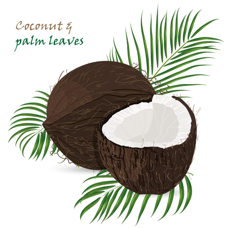 Coconut, whole and pieces with palm leaves isolated on white background. Colorful botanical vector ilustration. Vintage tropic design. Good idea for Summer jungle Fashion seamless pattern