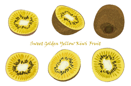 Set of hand-drawn yellow kiwi fruit, single, peeled and sliced fruits. realistic drawing, isolated on white background. Vector illustration