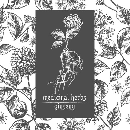 Croquis à l'encre botanique réaliste de racine de ginseng, de fleurs et de baies isolés sur fond blanc Collection d'herbes florales Plante de médecine chinoise Conception de cartes Illustration vectorielle rustique vintage.